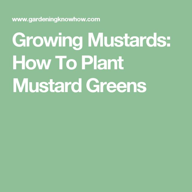 Growing Mustards: How To Plant Mustard Greens