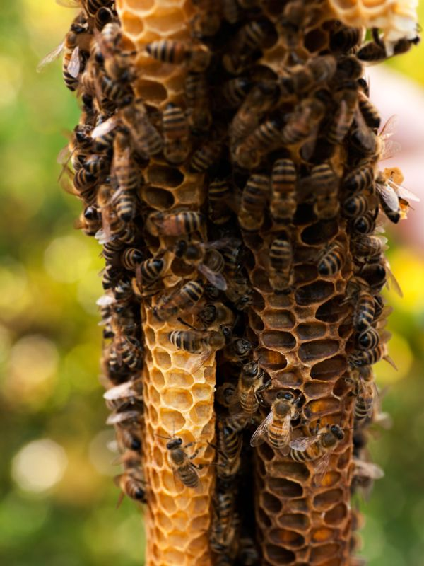 Awesome Bienen sind unsere besten Freundinnen im Sommer Aber was machen sie eigentlich im Winter Ein Besuch bei den Bio Imkern