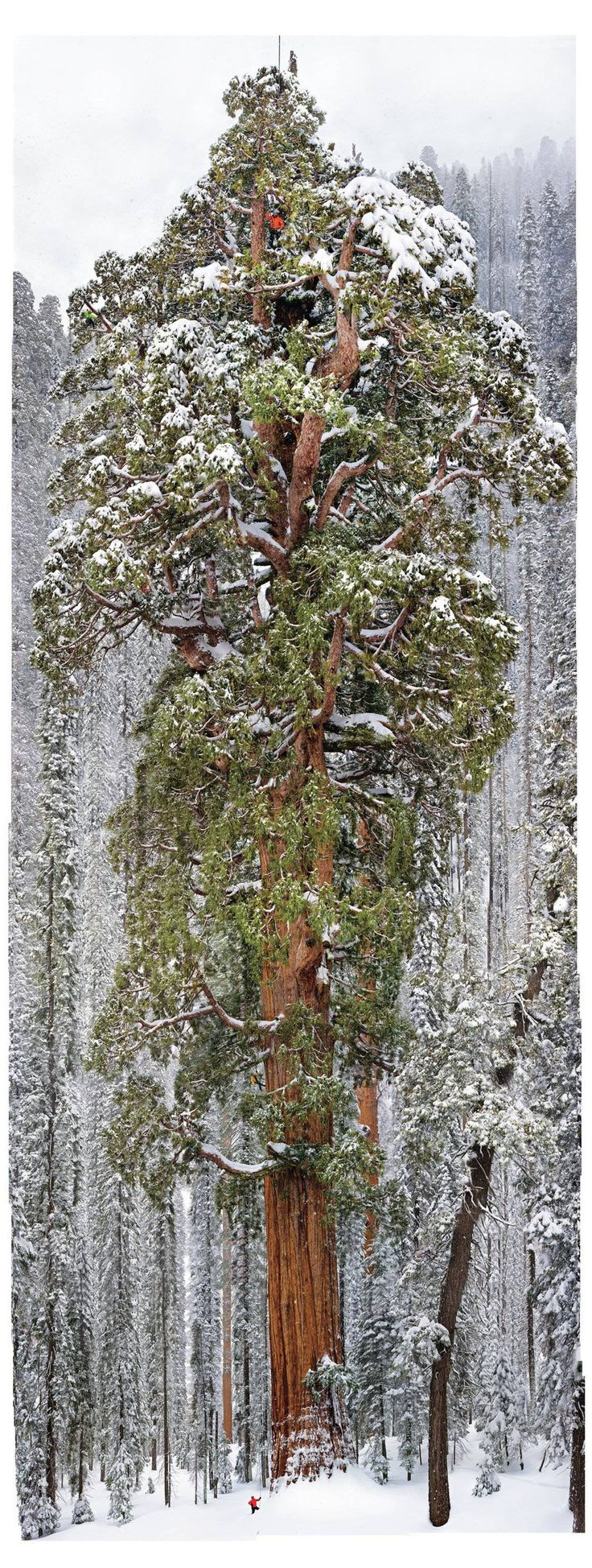 3,200 year old tree in the Sequoia National Park. (You really can't believe how massive it is until you are seeing it in person)
