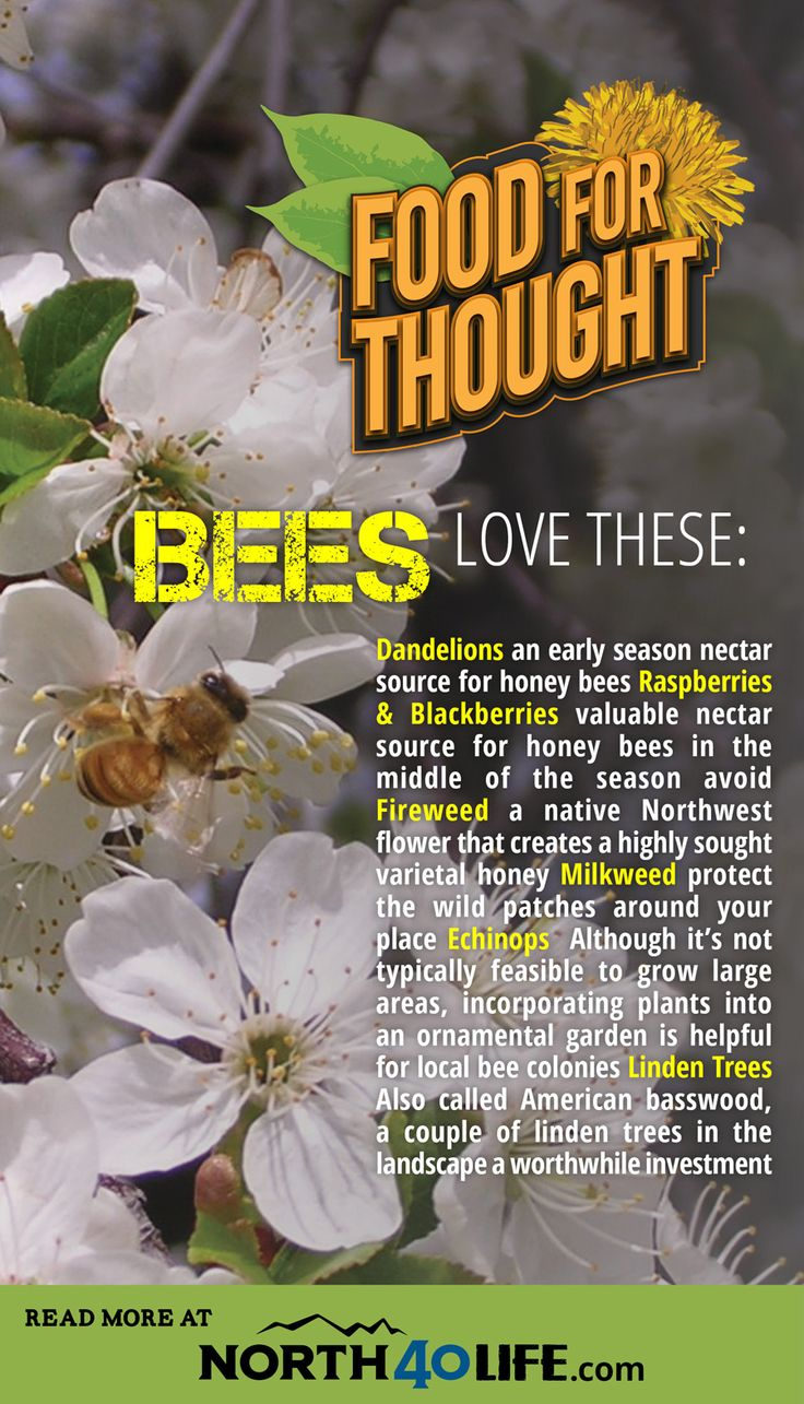 70 best backyard beekeeping images on pinterest backyard