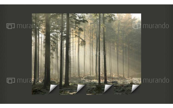 Z czym kojarzy Wam się ta fototapeta? Bo nam z magicznym i tajemniczym lasem :-)