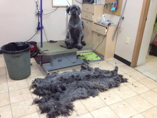 103 best mad marti images on pinterest dog grooming salons pro tips for diy dog grooming dogster solutioingenieria Gallery