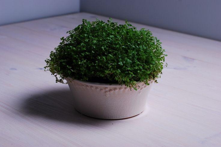 Donica biała wykończona szkliwem z mikropęknięciami. Ozdobi parapet każdego miłośnika minimalizmu. Podkreśli zieleń Twoich roślin.