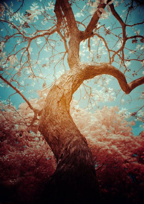 Beautiful. I love trees; they are both beautiful and necessary.