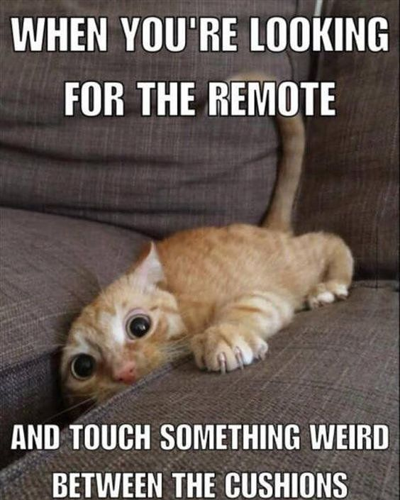 #kittens #remote #couch #weird #faceexpression #slimy #eww #funnyquotes #funnykittens. #humorquotes #always #followforfollow #kidsstuff #oldcandy #kidstoys http://quotags.net/ipost/1619056884522611025/?code=BZ4C6iJHvFR