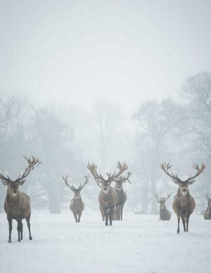 Reindeer :: House of Valentina