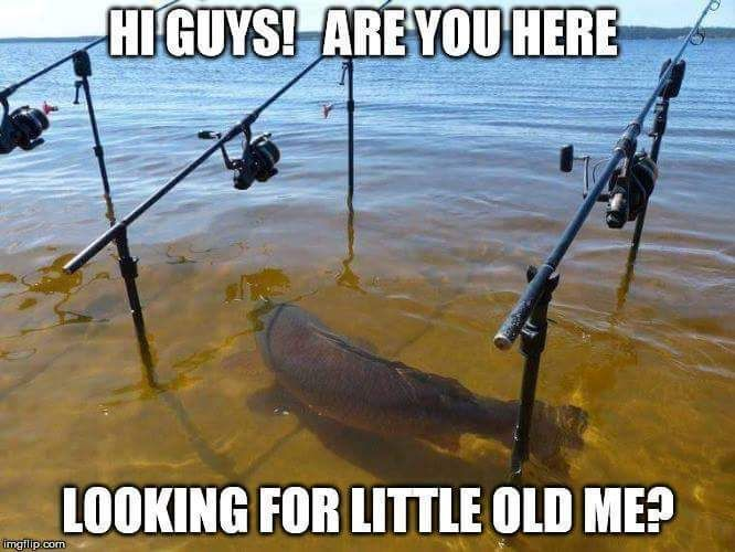 Funny fish memes - photo#50