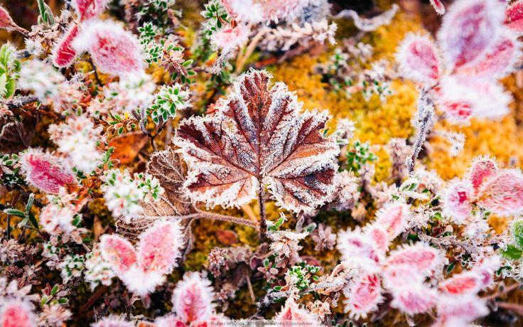 Winter, ice, snow, frost, blizzard, beauty, leaves, Ilkka Hämäläinen