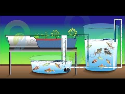 What is a CHOP Aquaponics System?