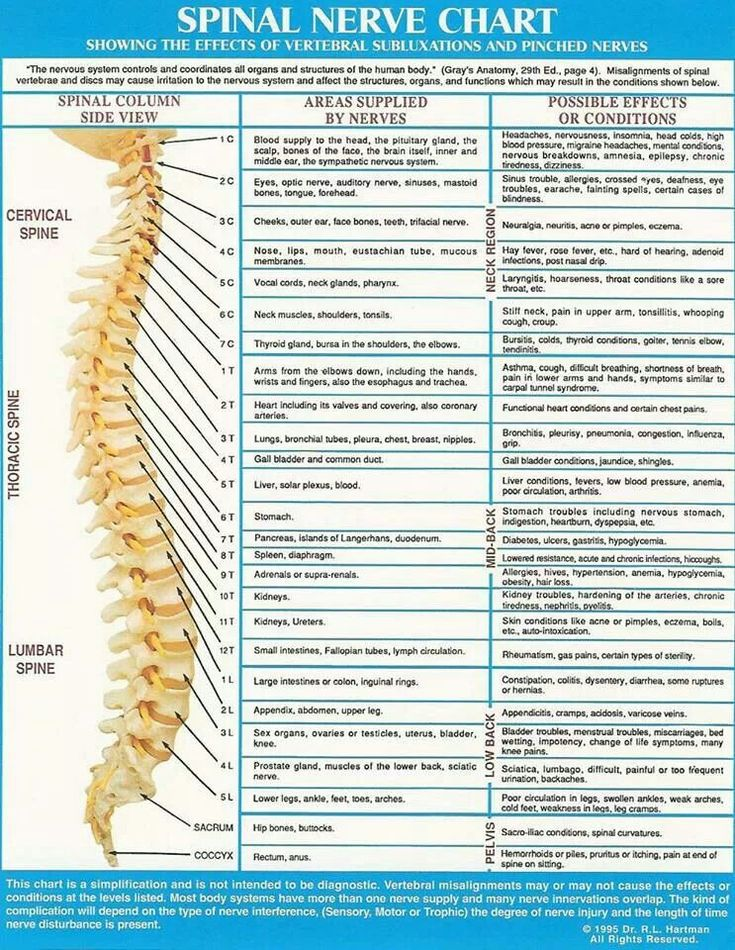 er diagram chart of accounts 25+ best ideas about spinal nerve on pinterest | nerves ... #15