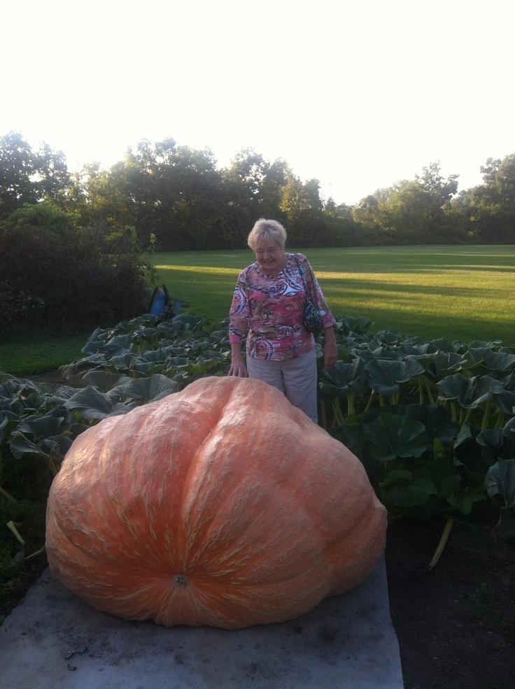 Giant Pumpkin! #pumpkin #giantpumpkin   Sweet Paul FALL