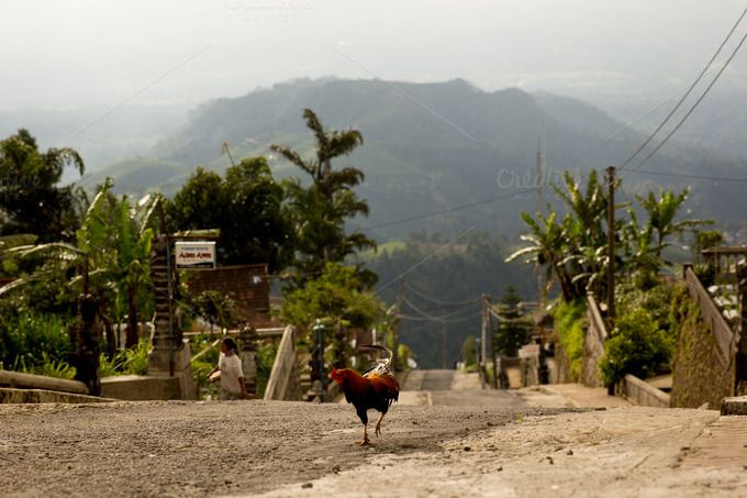 A street with cock by Farkas B. Szabina on @creativemarket