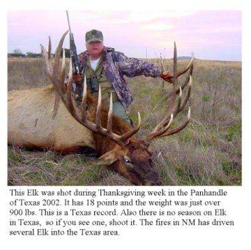 Biggest Bull Elk Ever Taken Big Pinterest Elk Bull