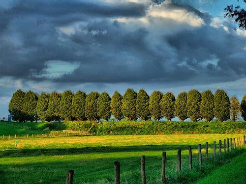 Treeline by Jan Pleiter, via Flickr