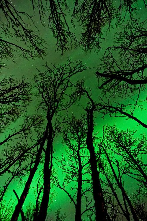 ✯ Trees and Northern Lights