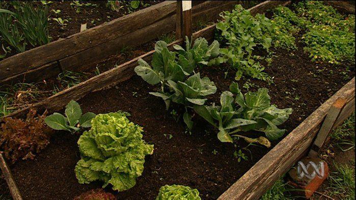 Vegetable gardens - Science (3,4,6)