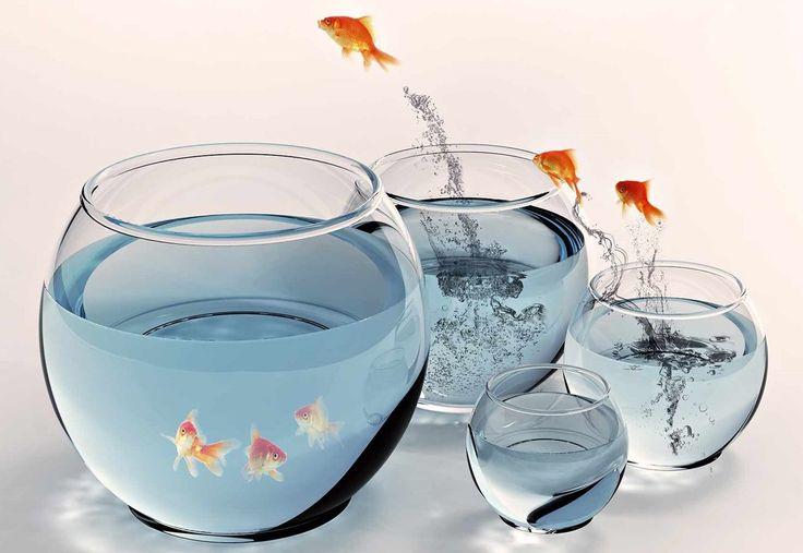 """Porquê sufocar os SONHOS, quando eles podem ser uma ponte para uma VIDA mais promissora e um FUTURO MELHOR! Clica no link e vê como podes mudar a tua vida: http://www.miluetone.com/c/?p=audience1&ad=conforto2 A realização dos nossos SONHOS implica sempre arriscar, não ter medo, ser audaz, em suma """"SAIR DA ZONA DE CONFORTO"""" NÃO SE ACOMODE E BUSQUE ALGO BOM, DIFERENTE E NOVO!"""