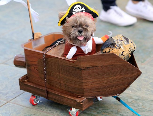 フィリピン・マニラ首都圏のショッピングセンターで開かれた仮装パーティー=ロイター / A Terrier puppy wears a pirate costume during 'A Petrifiying Trail Pet' costume party at a mall in Pasay city, metro Manila, Philippines October 23, 2016. REUTERS/Romeo Ranoco