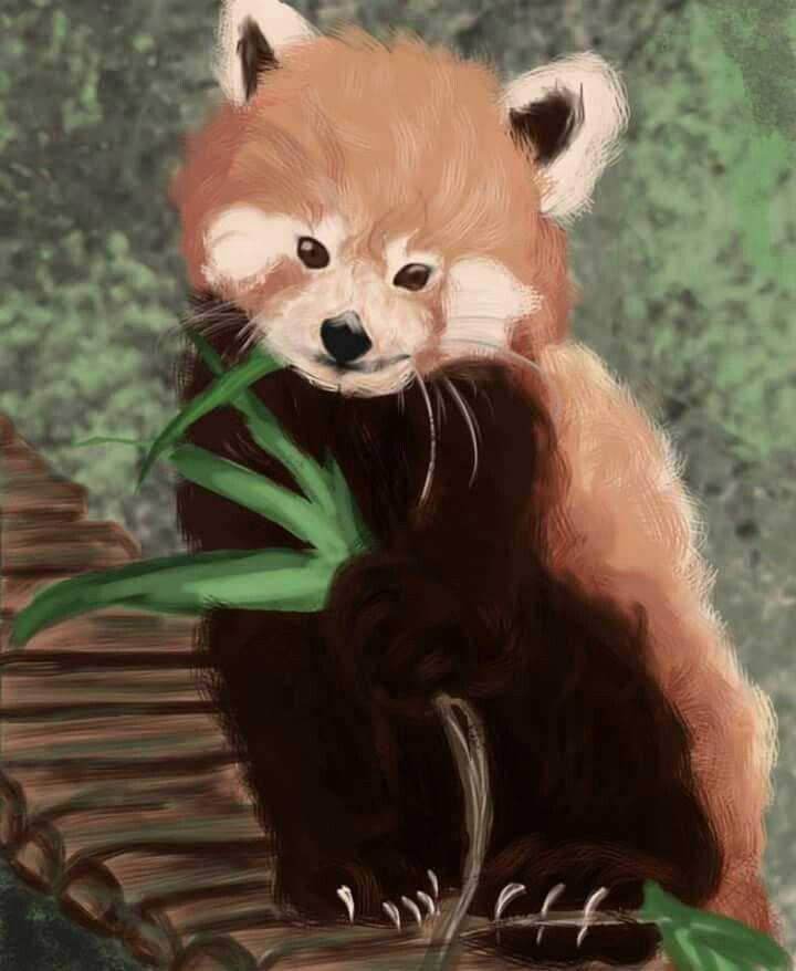 Panda rosso digital paint
