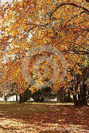 Otoño En El Parque - Descarga De Over 32 Millones de fotos de alta calidad e imágenes Vectores% ee%. Inscríbete GRATIS hoy. Imagen: 54357597