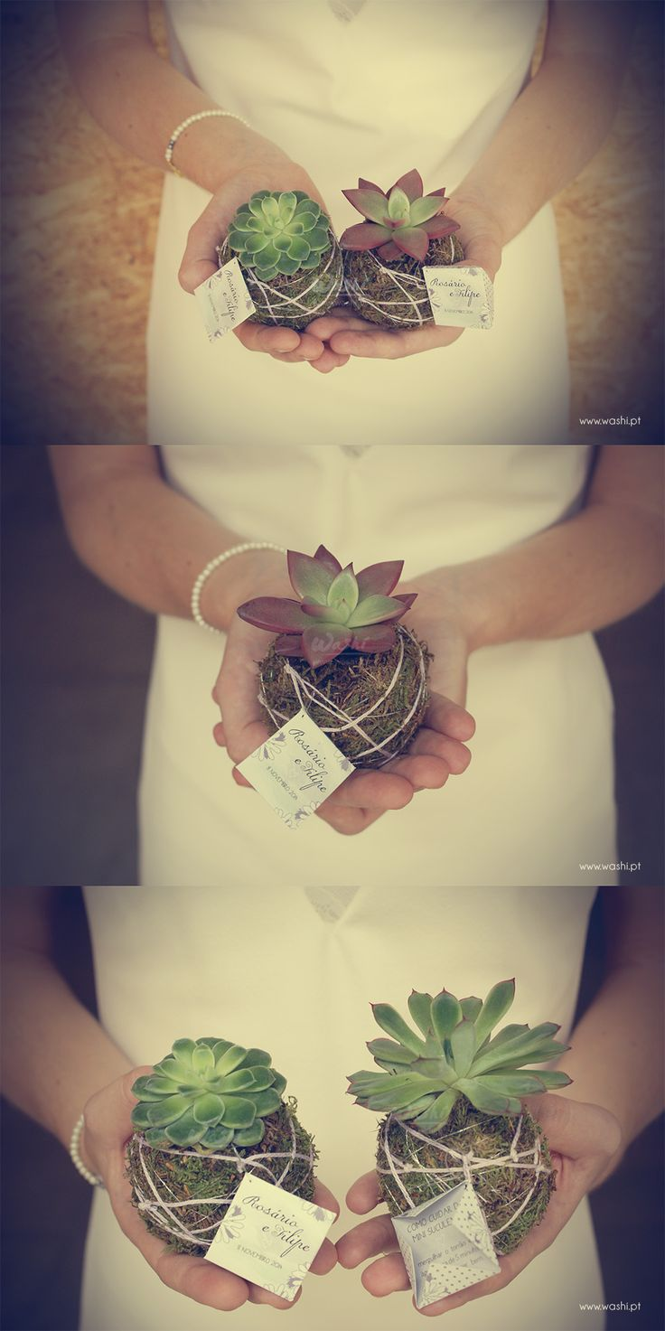 washi.pt / Lembrança de Casamento Mini Suculenta Kokedama  / Wedding Keepsake Mini Succulent