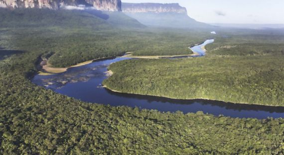 Almost 400 New Species Found In Amazon Rainforest But Deforestation Threatens Discovery Of More