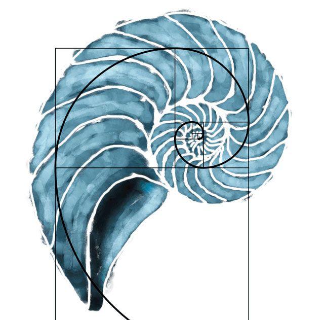 espiral secuencia fibonacci tatuaje - Buscar con Google