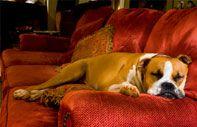 Pet friendly cabins - Auntie Belham's