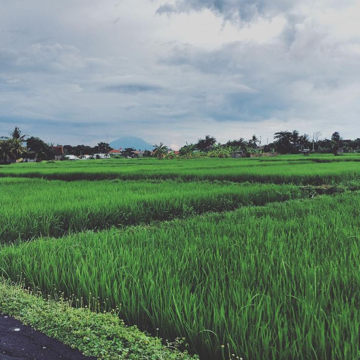 """jamee on Instagram: """"I love watching the rainy season afternoon storms rolling in over the rice fields, it resets order and calm  #bali #baliexpat #calmbeforethestorm #exploring #indonesia #instagram #rain #ricefields #travel #travelstoke"""""""