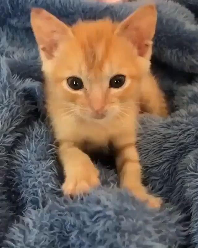 Little Orange Kitten Cool Cat Tree House Lands Cape Gardening Cute Animals Baby Cats Cute Baby Cats