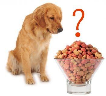 Buraya dikkat: Köpeklerin besin gereksinimleri.. Detaylar ajanimo.com'da.. #ajanimo #ajanbrian #hayvan #animal
