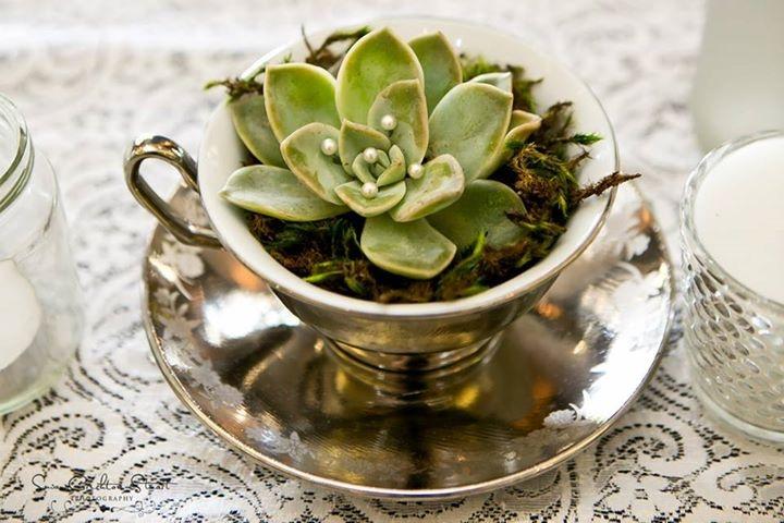 succulent in a teacup...