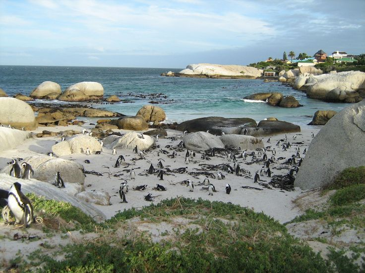 Visit the penguins at Boulders Beach in Cape Town