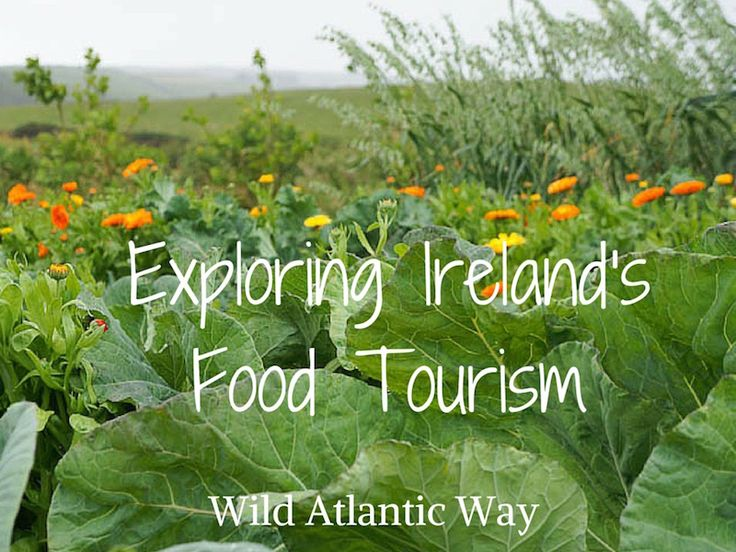 We've only scratched the surface of Irish food tourism in County Kerry and County Clare, but we hope to return next year to explore even more.