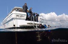Boat dive Sydney aboard Pro Dive's Sealife V.