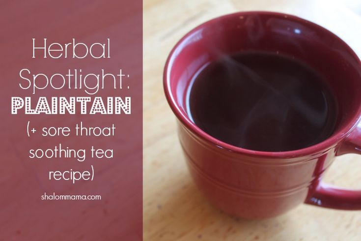 Herbal Spotlight: Plaintain (and Sore Throat Soothing Tea Recipe) - Shalom Mama