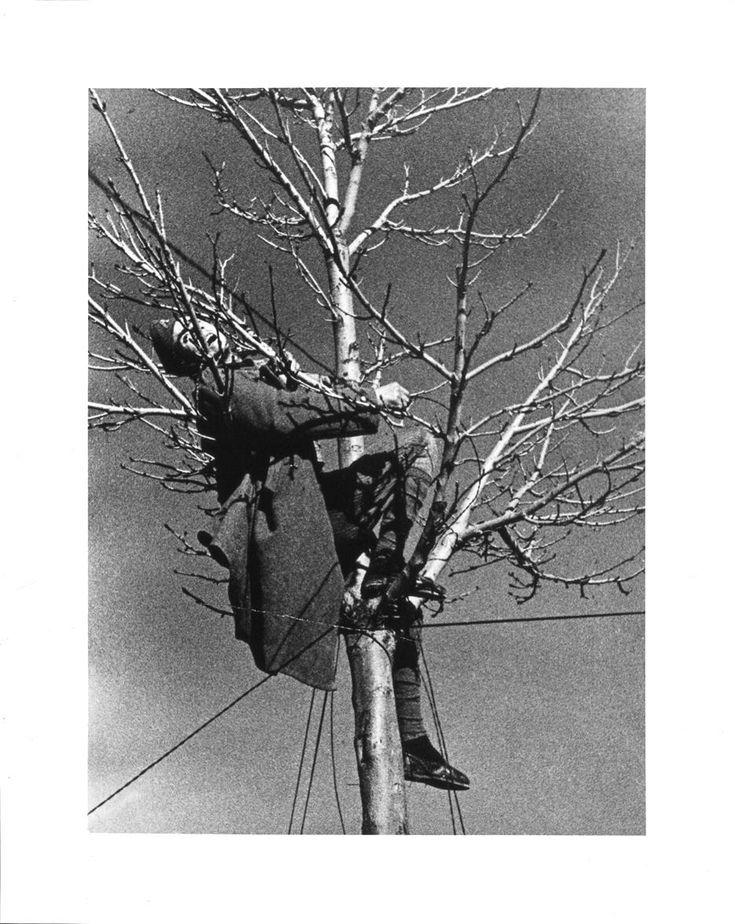 Muerte de un miliciano en un árbol sin hojas (Teruel, diciembre de 1937), foto de Robert Capa.   Museo Nacional Centro de Arte Reina Sofía