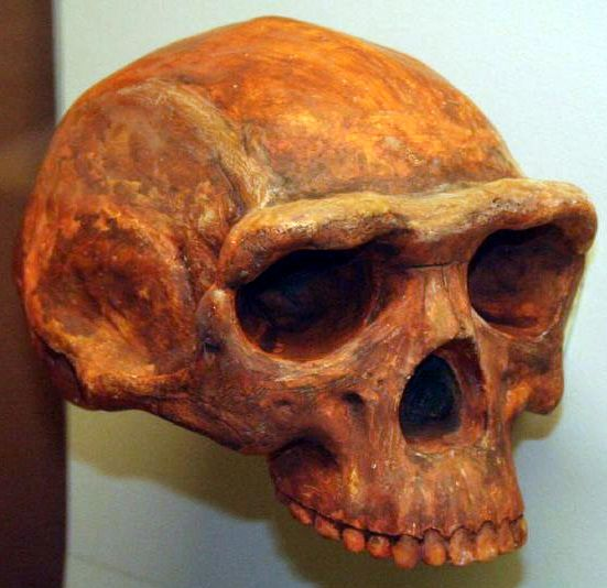 An ancestor to modern humans, arose at least 1.8 million years ago. Around that time in the fossil record, archaeologists see big shifts in brain size and body size in ancient hominins. An extinct species of tool-making humans apparently occupied a vast area in China as early as 1.7 million years ago, about 700,000 years older than previously thought, researchers say.