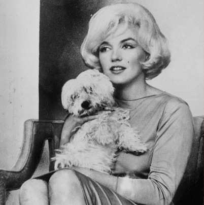 Marilyn and her adorable dog 'MAF' given to her by Frank Sinatra.