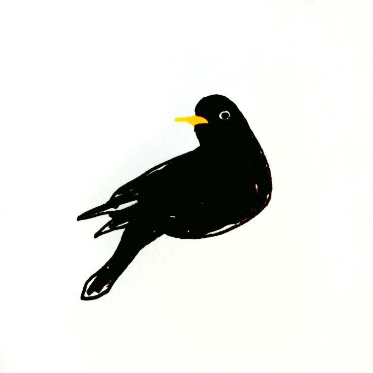 Blackbird by Marie Åhfeldt, Mås Illustra. www.masillustra.se #blackbird #bird #black #masillustra #illustration
