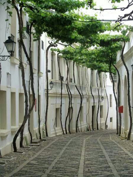 Grapes in the street- Jerez, Spain