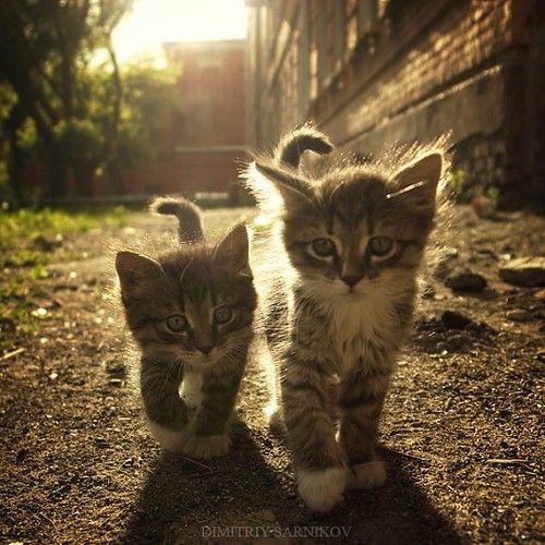 Kitten gang