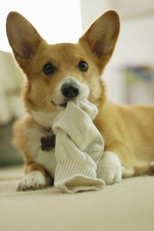 Lil sock thief...