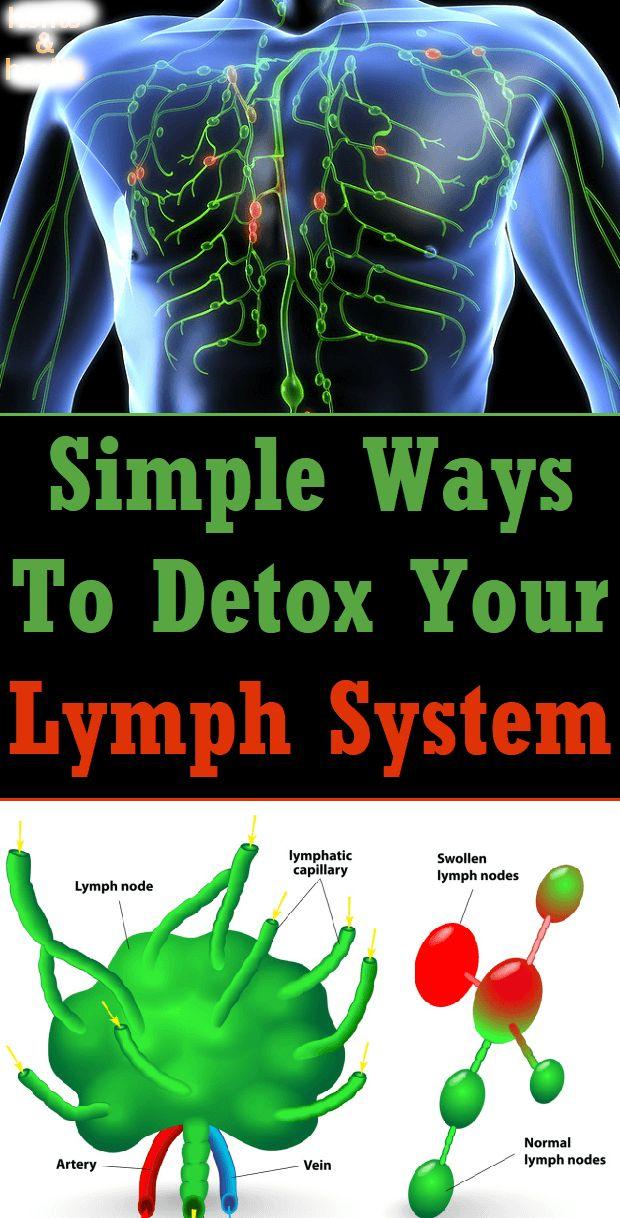 Best 20 Lymph Vessels Ideas On Pinterest Lymphatic