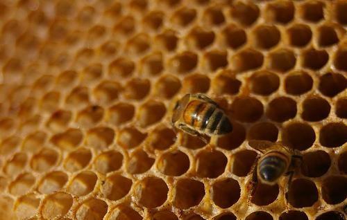 miele Miele di Manuka per curare le ferite e uccidere le cellule tumorali