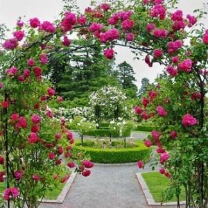Rose Garden Arch Entrance