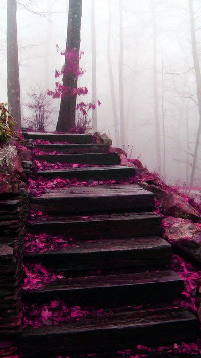 purple flower petals and steps... Blue Ridge Mountains, North Carolina