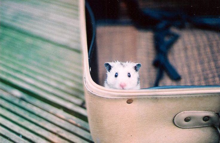 Can I come?Adventure Awaits, Animal Baby, Peek A Boos, Sweets Animal, Baby Animal, Funny Animal, New Friends, Animal Photos, Suitcas