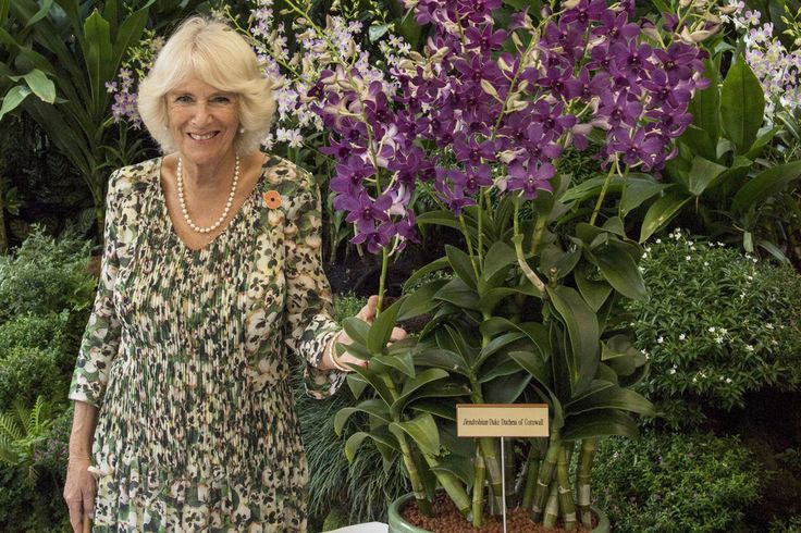 Camilla Parker Bowles Photos - Camilla, Duchess of Cornwall takes part in an Orchid Naming ceremony - where they had a new orchid named after them, Dendrobium Duke Duchess of Cornwall - during a visit to the National Botanical Gardens on November 1, 2017 in Singapore.  Prince of Wales and Camilla, Duchess of Cornwall are on a tour of Singapore, Malaysia, Brunei and India. - The Prince Of Wales & Duchess Of Cornwall Visit Singapore, Malaysia, Brunei And India - Day 3