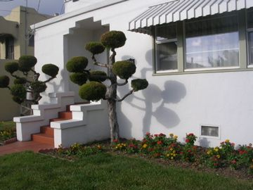 Garden Design Trees 161 best garden design: trained trees images on pinterest | garden